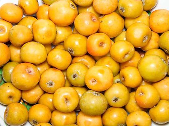 Яблоко сибирское